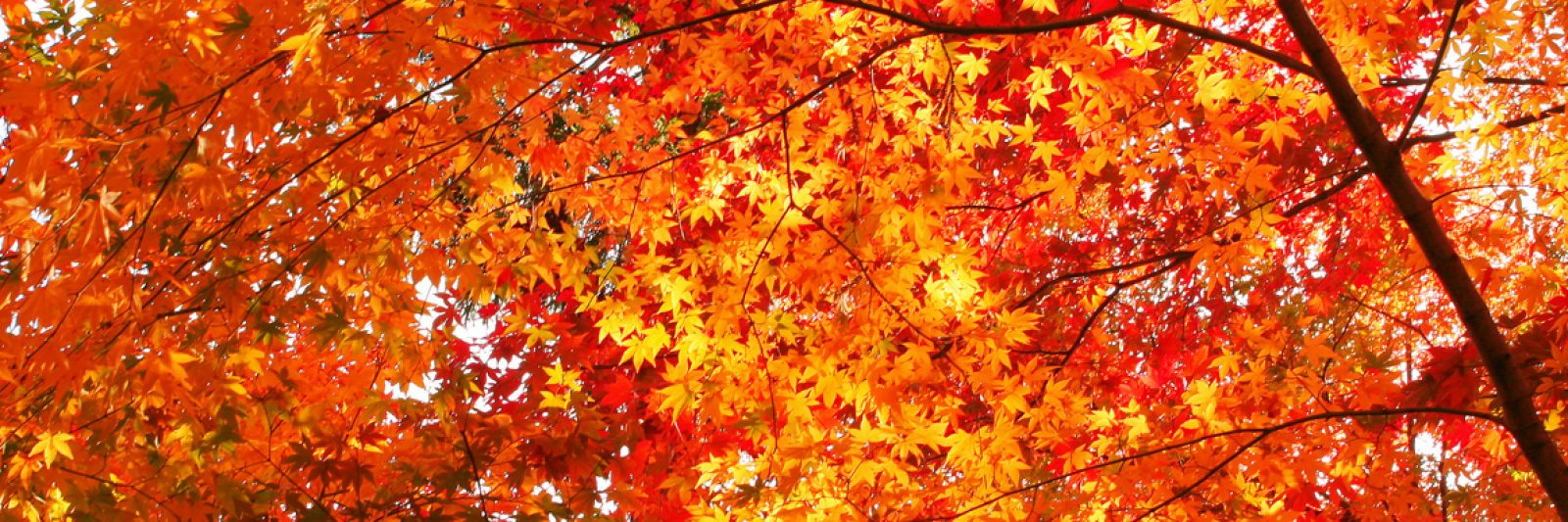 Fall Leaves - Claycomb Chalets